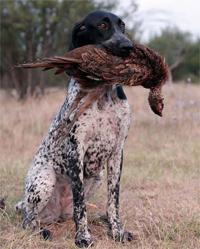 La FNC organiza una las pruebas caninas más completas, la competición de Campo y Agua
