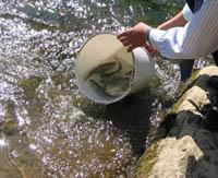 Bizkaia repuebla los ríos con 6.000 salmones y 7.000 truchas autóctonas