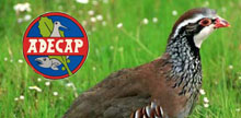 "ADECAP se adhiere a la iniciativa popular ""S.O.S. Salvemos la Perdiz Roja"""
