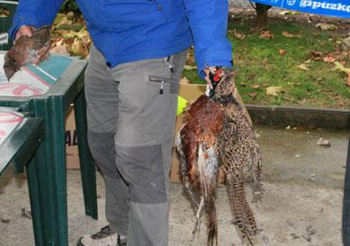 La final de Euskadi reunirá a los actuales referentes de la caza menor con perro