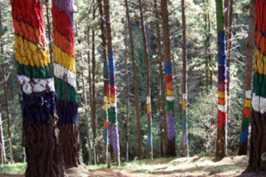 El Colegio Oficial de Ingenieros Técnicos Forestales recuerda que los bosques son vitales
