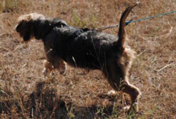 Copa Navarra perros de rastro