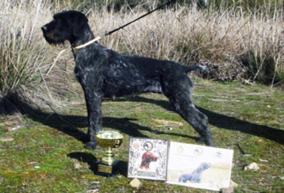 Los mejores perros polivalentes en la Cendea de Cizur y Coto Valdorba