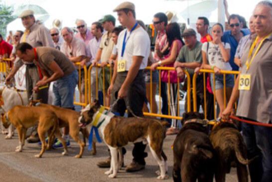 """Calidad y cantidad en la V edición de la feria de perros de caza """"Berrocaza"""""""