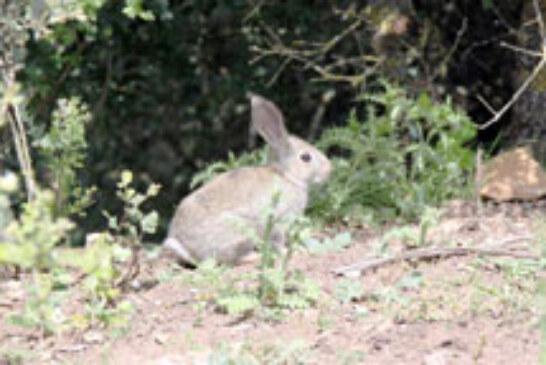 La Federación extremeña muestra su honda preocupación por la falta de caza menor