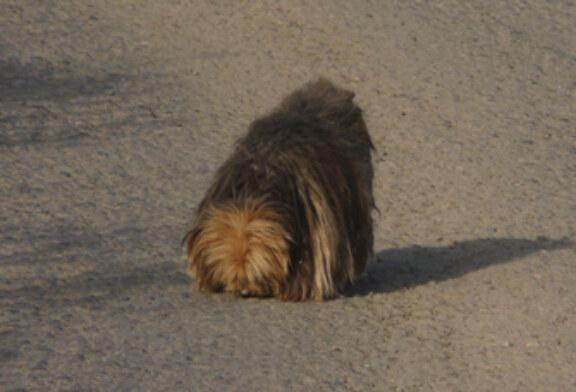 UNITEGA solicita indemnizaciones para los dueños de los perros comidos por el lobo