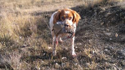Publicado el borrador de la orden general de vedas de caza 2014-2015 en Navarra