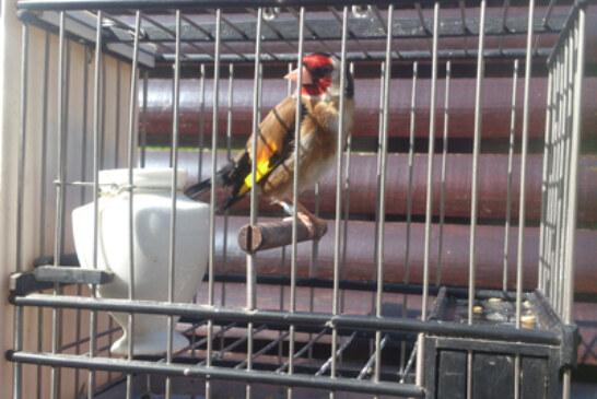 68 aves participaron en el Campeonato de Euskadi de silvestrismo