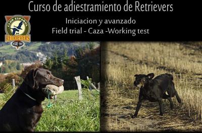 Curso de adiestramiento de retrievers en Tudela