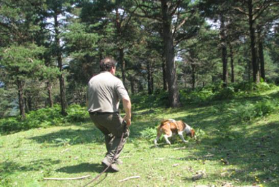 Perros de rastro mañana en Gorosmendi