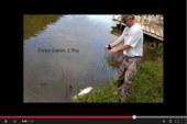 ¡Pesca una carpa con arco!