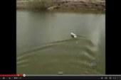 ¡Pesca con lancha de control remoto!