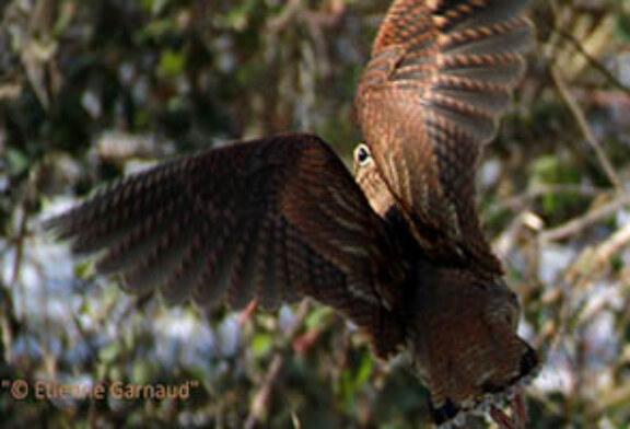 FOTO DEL DÍA: ¡Volando!