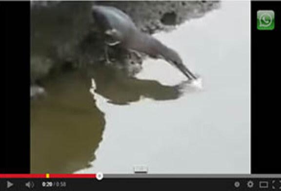 Ave pesca utilizando un cebo