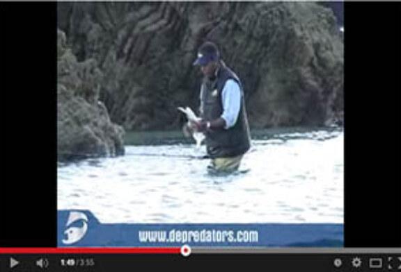 Pesca de lubina