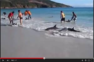 Bañistas salvan decenas de delfines