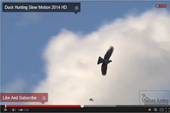 Lances de palomas