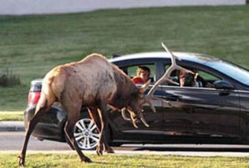 FOTO DEL DÍA: Ataque de ciervo