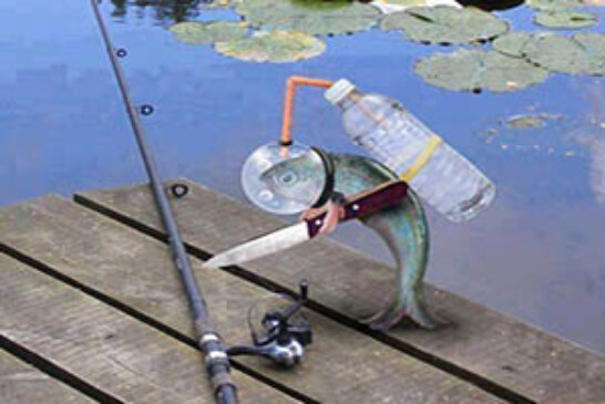 FOTO DEL DÍA: ¡Los peces se revelan!