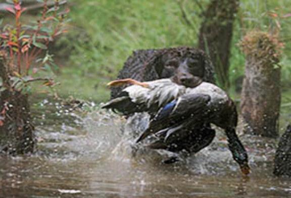 FOTO DEL DÍA: El cobro del jabalí