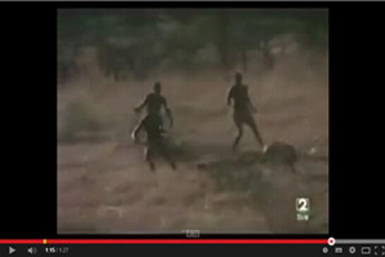 Cazando jabalís con chimpancés