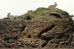 FOTO DEL DÍA: Madriguera de conejos