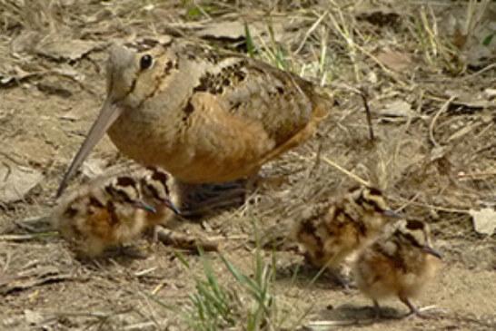 FOTO DEL DÍA: Madre becada y crías