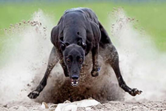 FOTO DEL DÍA: Fuerza y velocidad