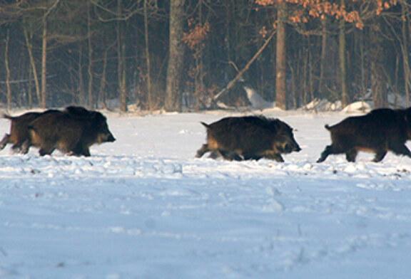 Prohibida la caza en Bizkaia por el temporal