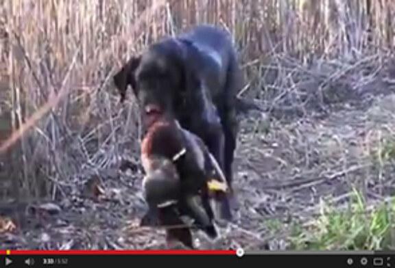 Homenaje a perro cazador