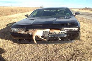 FOTO DEL DÍA: Accidente de tráfico