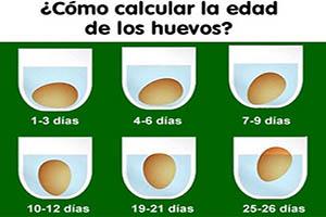 ¿Sabes el tiempo de un huevo?
