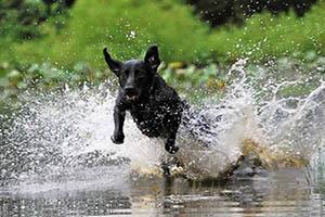 FOTO DEL DÍA: Perro de agua