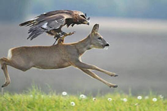 FOTO DEL DÍA: La fuerza del depredador
