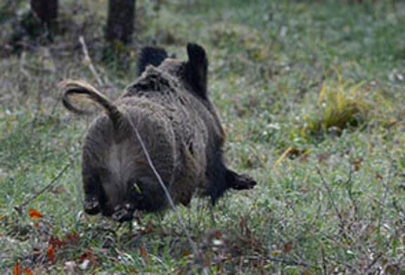 Nuevo campo de adiestramiento de perros de rastro en Bizkaia