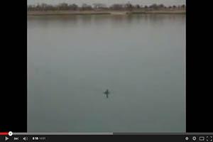 Top de ataques de peces a patos