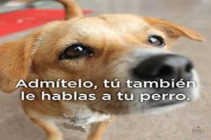 FOTO DEL DÍA: ¿Hablas con tu perro?