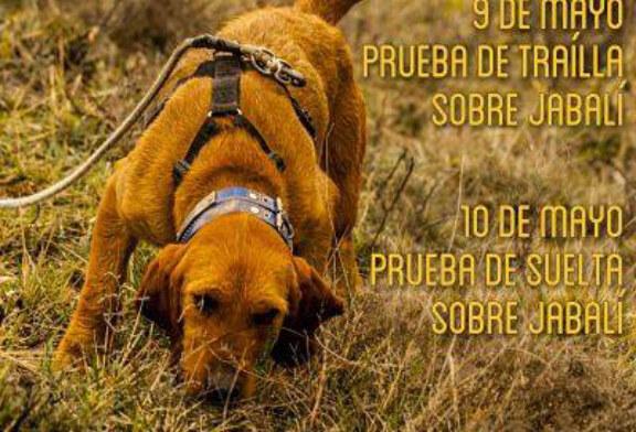 Los perros de caza mayor protagonistas en Lumbier
