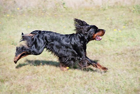 Campeonatos de Euskadi de Perros de Muestra y Silvestrismo el domingo