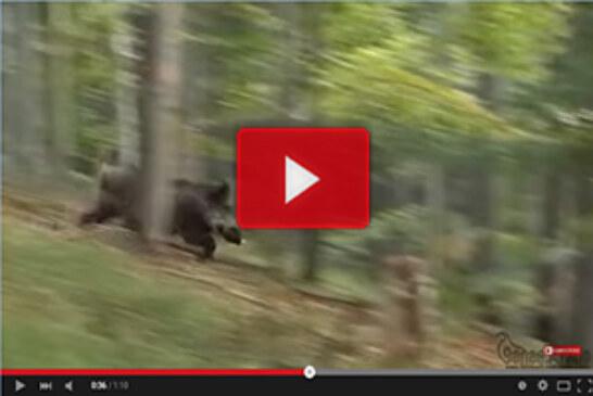Espectaculares imágenes de caza