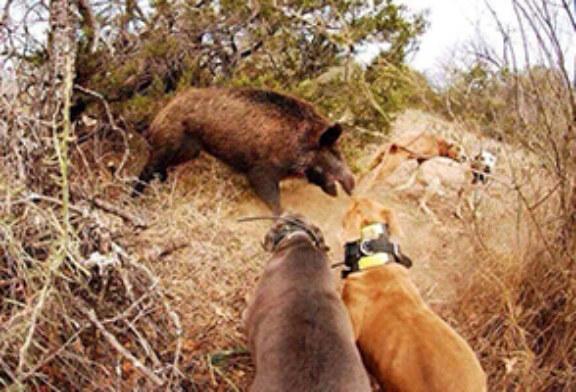 Foto del día: ¡Espectacular escena de caza mayor!