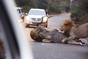 Foto del día: ¡Caza en las calles!