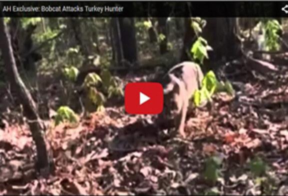 Un cazador, atacado por un lince mientras lo filmaba