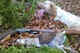 Cantabria lanza un carné de cazador de sorda para obtener información de presión cinegética