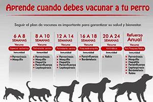 Aprende cuando debes vacunar  tu perro