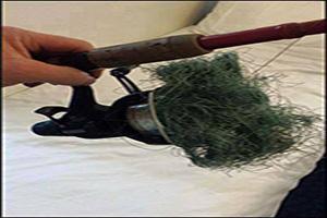 Foto del día: El colmo de un pescador