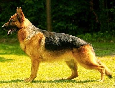 El Gobierno Vasco aprueba el listado de razas de perros prohibidas para la caza