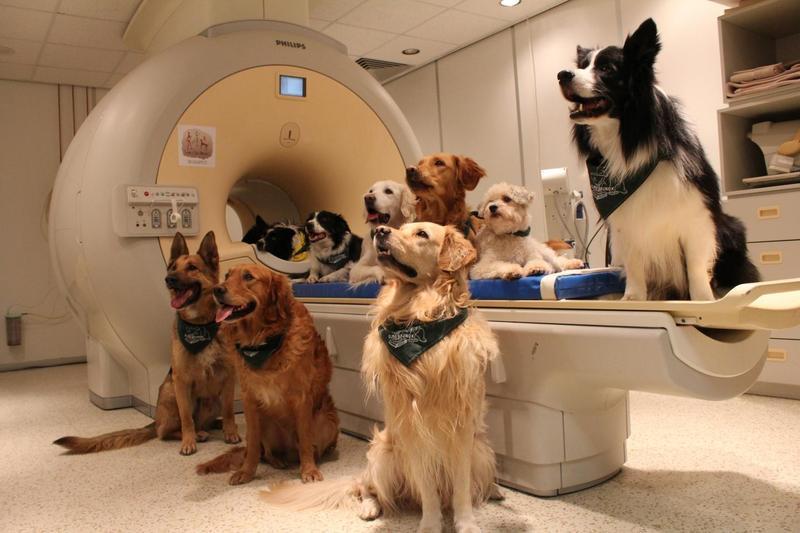 No, no estabas loco, tu perro te entiende, y así lo dice la ciencia