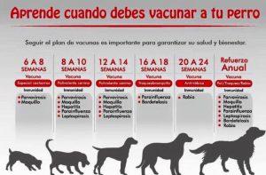 ¿Sabes cuándo vacunar a tu perro?
