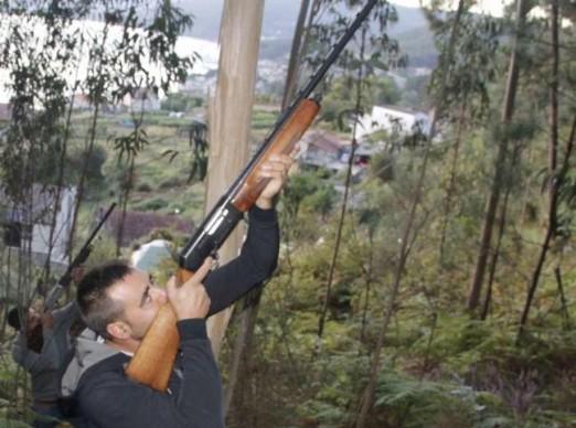 Cazadores eliminan nidos de avispa velutina en Moaña y Vilaboa (Galicia)